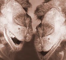 """Watering Hole Gossip"" - Camels gossiping? by ArtThatSmiles"