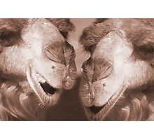 """""""Watering Hole Gossip"""" - Camels gossiping? Photographic Print"""
