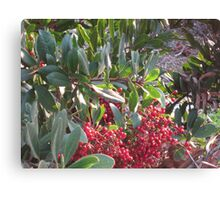 Green icicles and red berries Canvas Print