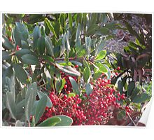 Green icicles and red berries Poster