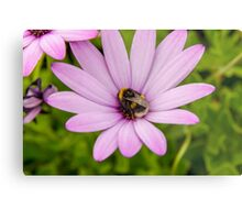 Bumble Bee Metal Print
