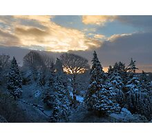 sunrise over snowy trees Photographic Print