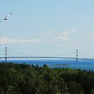 Flight Over Mighty Mac by Jessica Sells