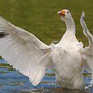 Goose stretch 2 by Alexa Pereira