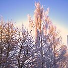 Winter light by Tarolino
