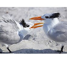 """ Hey ! Mom Said it Was MY Tern "" Photographic Print"