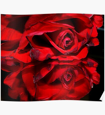 Red Rose Reflection Poster