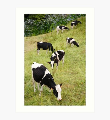 Holstein cows Art Print