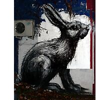 Giant Rabbit, By ROA Photographic Print
