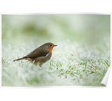 Robin Throwing Mealworm Poster