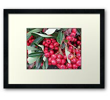 Boducious Berries  Holiday in your face Framed Print