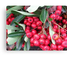 Boducious Berries  Holiday in your face Canvas Print