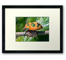 Harlequin Beetle With Eggs Framed Print