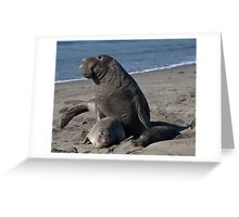 Beautiful Elephant Seal Greeting Card