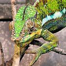 Karma Chameleon by SuddenJim