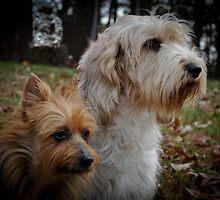 Tippy and Daisy by Lolabud
