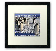 Emperor Penguins, Antarctica Framed Print