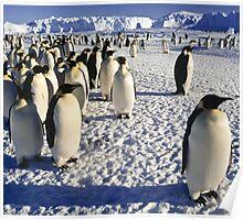 Emperor Penguins, Antarctica Poster