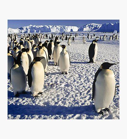 Emperor Penguins, Antarctica Photographic Print