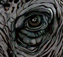 Elephant Eye by WoolleyWorld