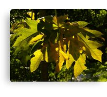 nature and sun II - naturaleza y sombra Canvas Print