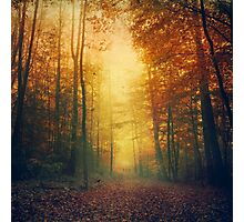 Autumn Morming Photographic Print