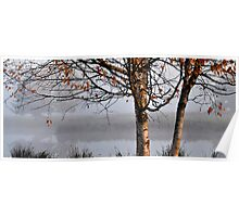 Late October Birches Poster