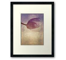 Rose coloured Framed Print