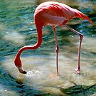 """""""Flamingo Drink"""" - Flamingo gets a drink by ArtThatSmiles"""