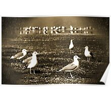 Lake Vacation: Great-Grandpa Seagull Family Portrait  Poster
