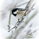 Winter Coal Tit by Sarah-fiona Helme