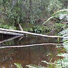 Reflections - North West Tasmania by RainbowWomanTas