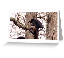 Turkey Vulture. Greeting Card