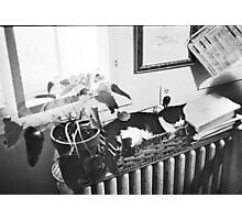 Cat in Basket Photographic Print