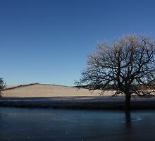 frozen trees, fields and pool by scoff