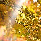 autumn delight by Tai Chau