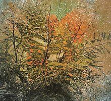 Nature Collage Print  by DFLC Prints