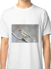 House sparrow perched on branch Classic T-Shirt