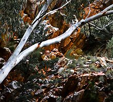 Ghost Gum Against Gorge by JourneyPhotos