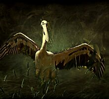 """""""Glorious Pelican ..."""" by Rosehaven"""