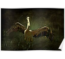 """Glorious Pelican ..."" Poster"