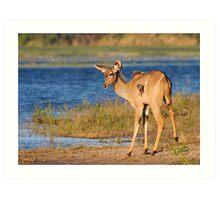 Riverside Kudu Art Print