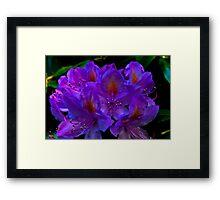 Rhodedendrum Flower Framed Print