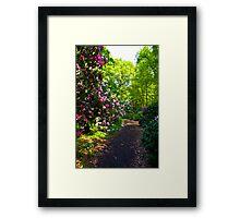 Flower Path Framed Print