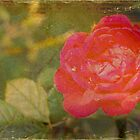 The Rose by Angi Allen