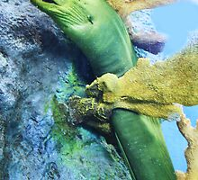 Green Moray  by Paulette1021
