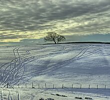 The Tree In Winter by Jamie  Green