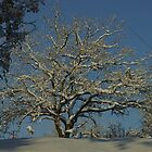 Winter Oak by marens
