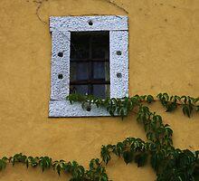 Vine and a Window by Karen  Rubeiz