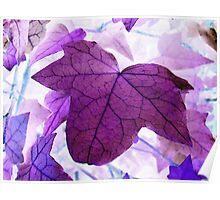 Photoshopped Leaf 1 Poster